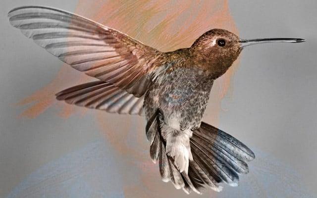 Maya Jane Coles – Humming Bird (HYPERCOLOUR)